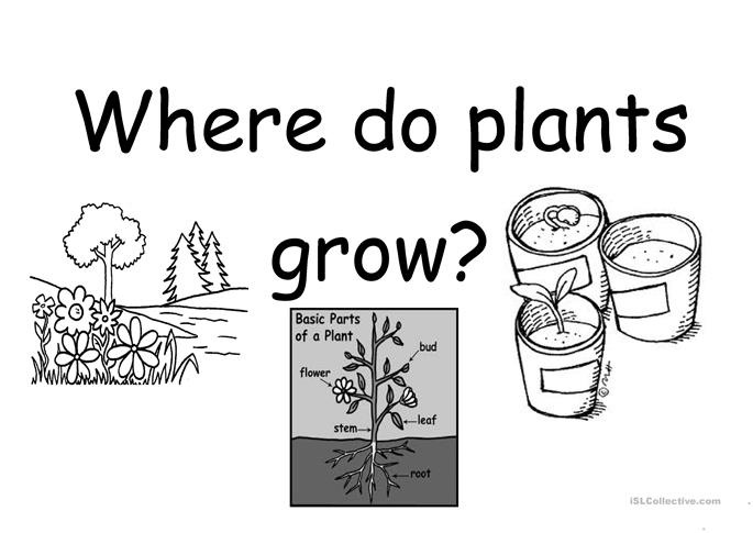 where do plants grow worksheet free esl printable worksheets made by teachers. Black Bedroom Furniture Sets. Home Design Ideas