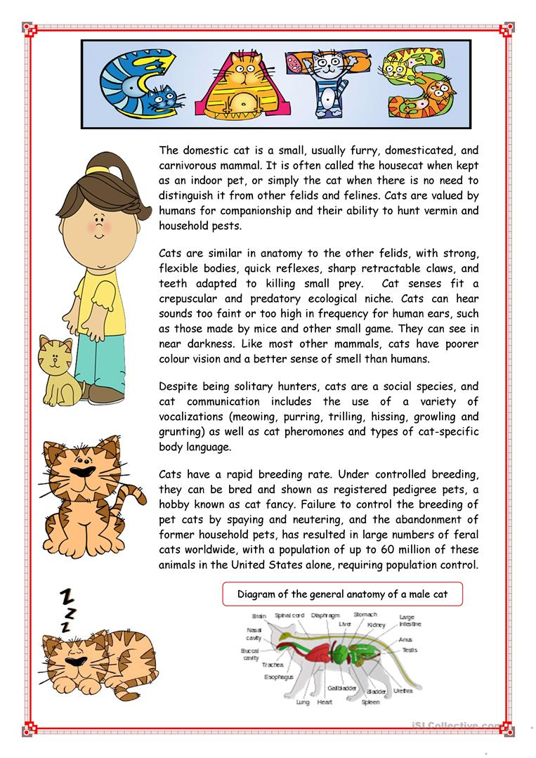 Reading Cats Worksheet Free Esl Printable Worksheets Made By Teachers