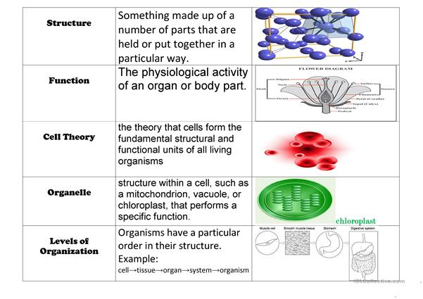 Cell Vocabulary Chart