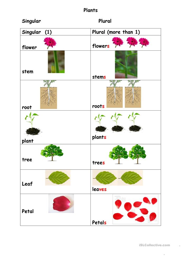 Plants singular plural worksheet - Free ESL printable worksheets made ...