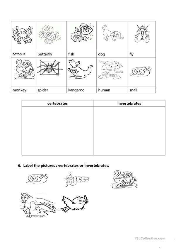 Fan image within invertebrates worksheets free printable
