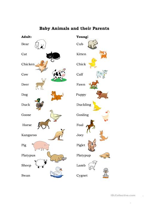 Baby Animals Worksheet Free Esl Printable Worksheets Made By Teachers