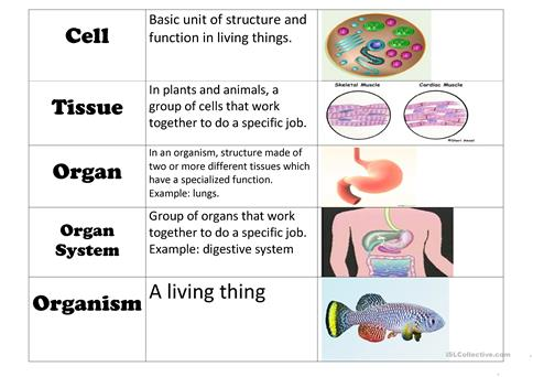 Cell Vocabulary Chart worksheet - Free ESL printable worksheets made ...