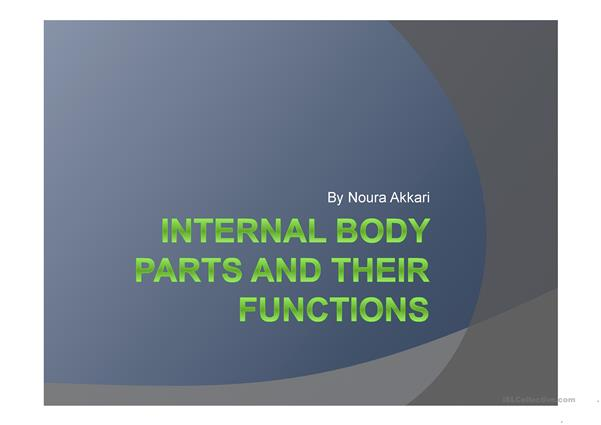Internal Body Parts and Their Functions