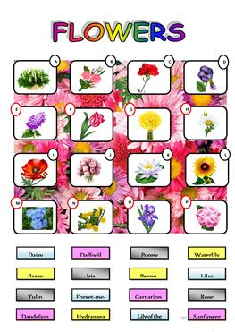 English worksheets: Flowers Project