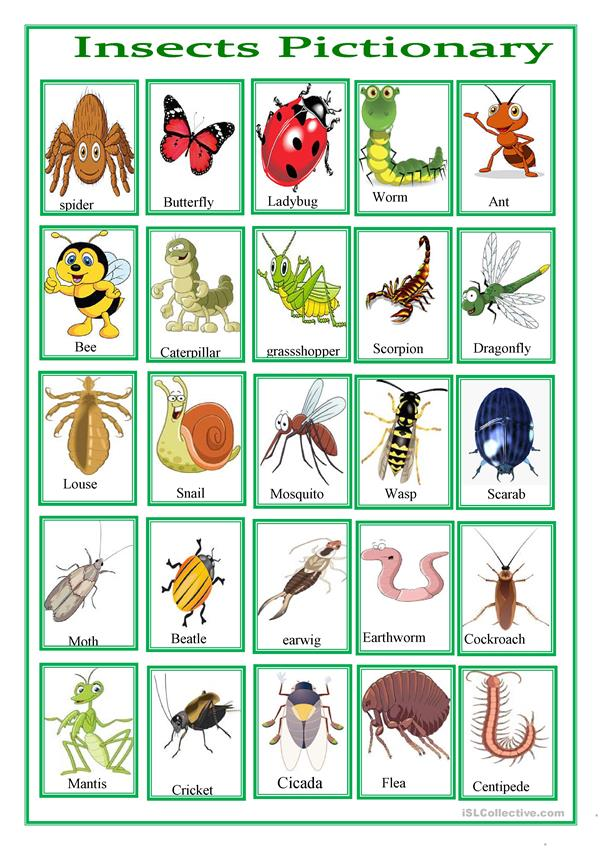 insects pictionary