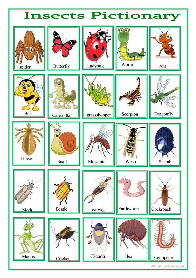 60 FREE ESL insects worksheets – Insects Worksheets for Kindergarten