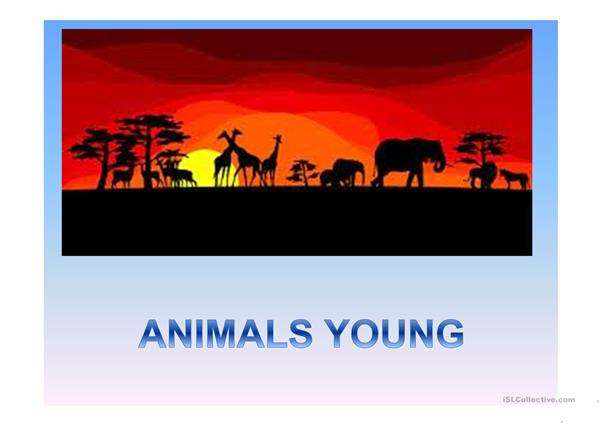 animals : young, sound, home