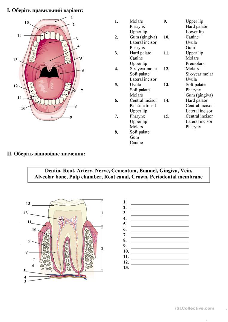 Teeth anatomy/oral cavity worksheet - Free ESL printable worksheets ...