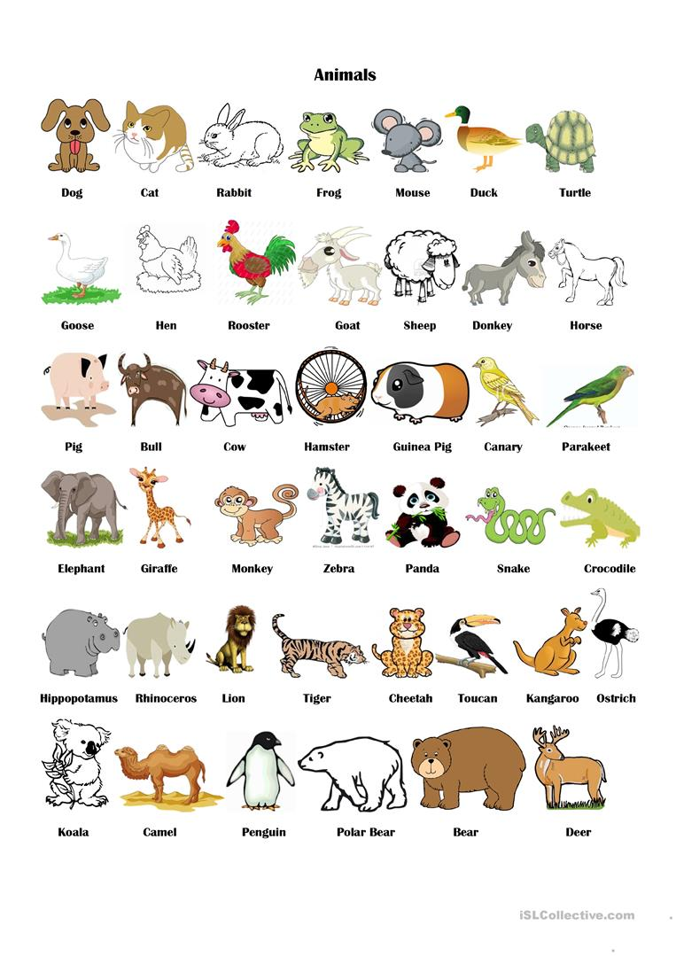 Souvent Animals Pictionary worksheet - Free ESL printable worksheets made  NH97