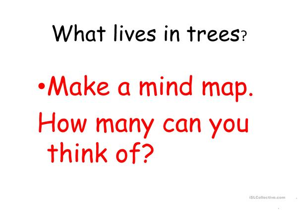 All About Trees!