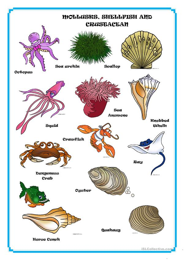 MOLLUSKS, SHELLFISH AND CRUSTACEAN
