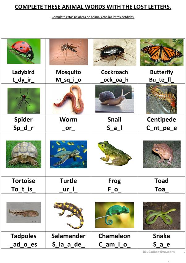 COMPLETE THESE ANIMALS WORDS