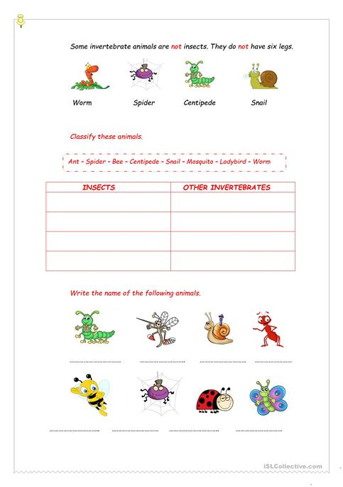 Invertebrates Worksheet Free Esl Printable Worksheets Made By Teachers