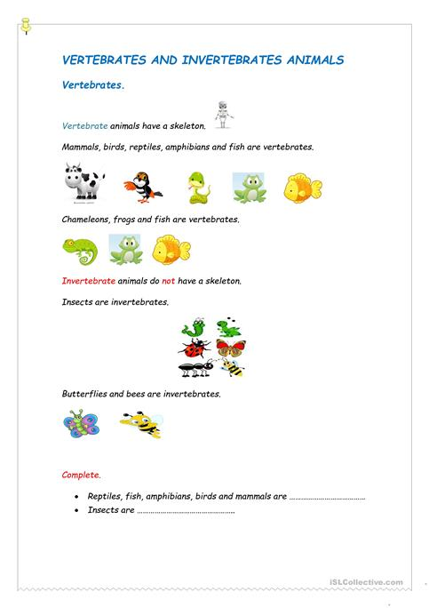 Vertebrates And Invertebrates Worksheet Free Esl Printable