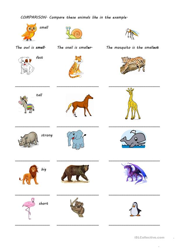 COMPARISON OF ANIMALS