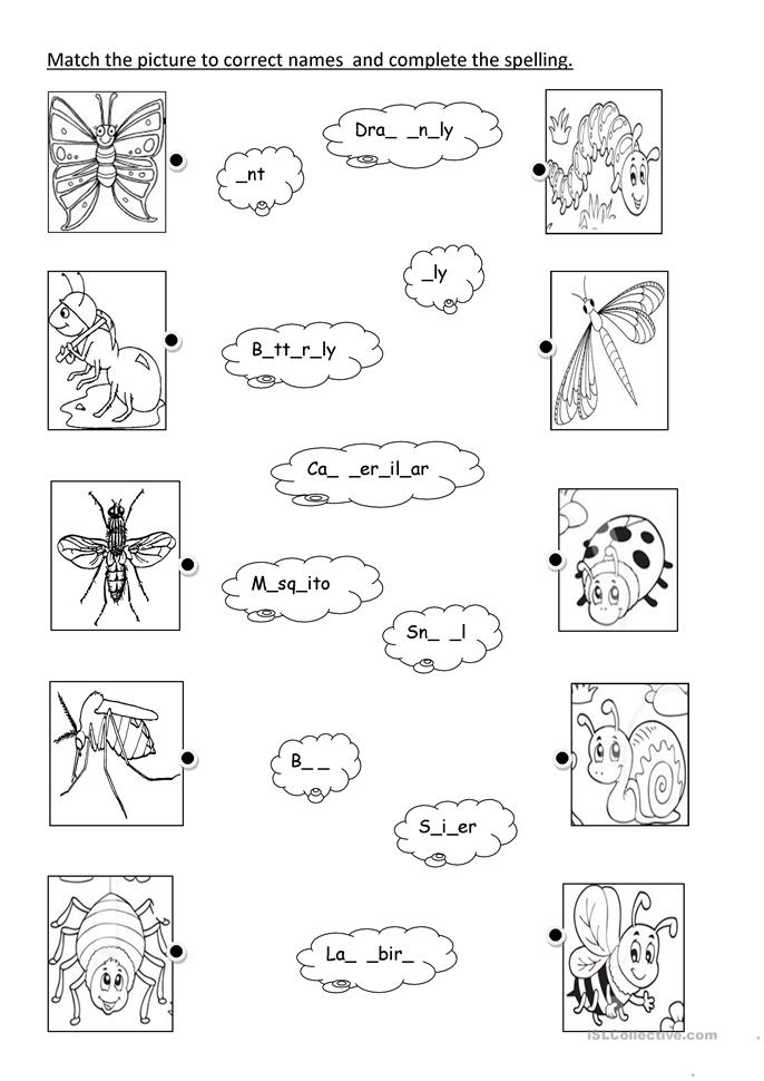 insects - ESL worksheets