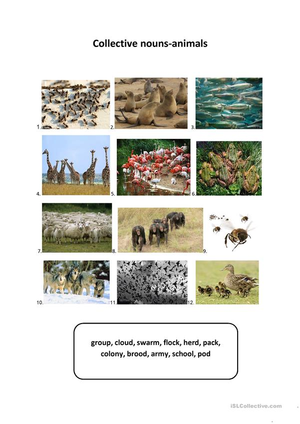 Collective nouns-animals