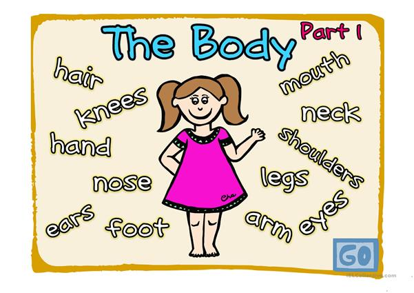 The body (Part 1-2)