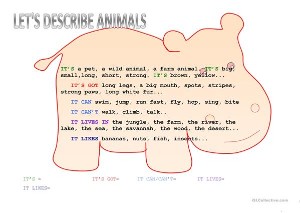 descrive animals