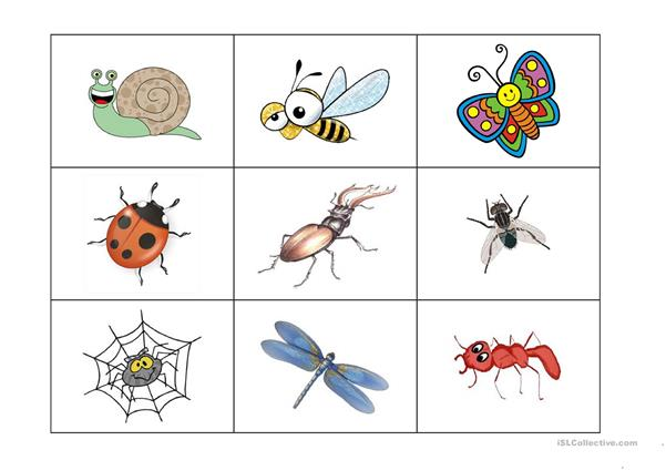 insects bingo game