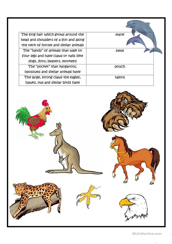 Special names for parts of some animals