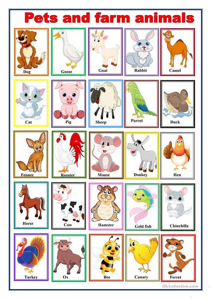 pets and farm animals worksheet free esl printable worksheets made by teachers. Black Bedroom Furniture Sets. Home Design Ideas