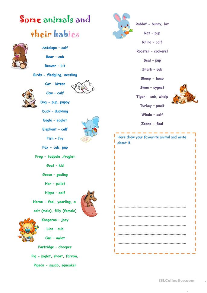 Worksheets Animals And Their Young Ones Worksheet 13 free esl babies worksheets some animals and their babies