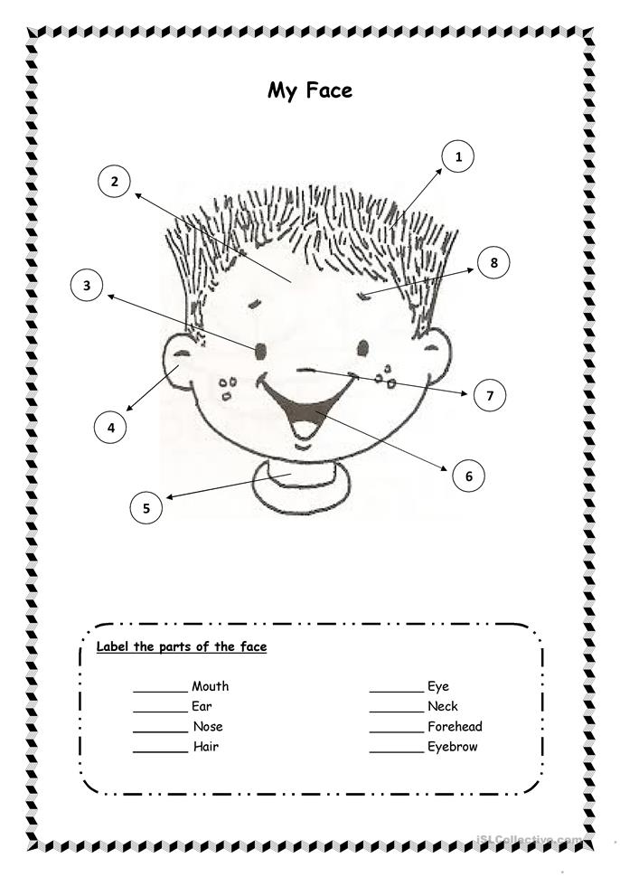 Parts of the face worksheet - Free ESL printable worksheets made by ...
