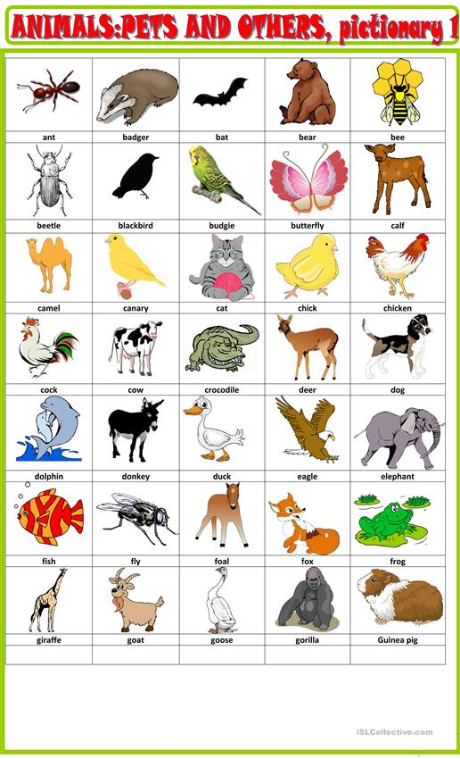 Animals and pets pictionary 1