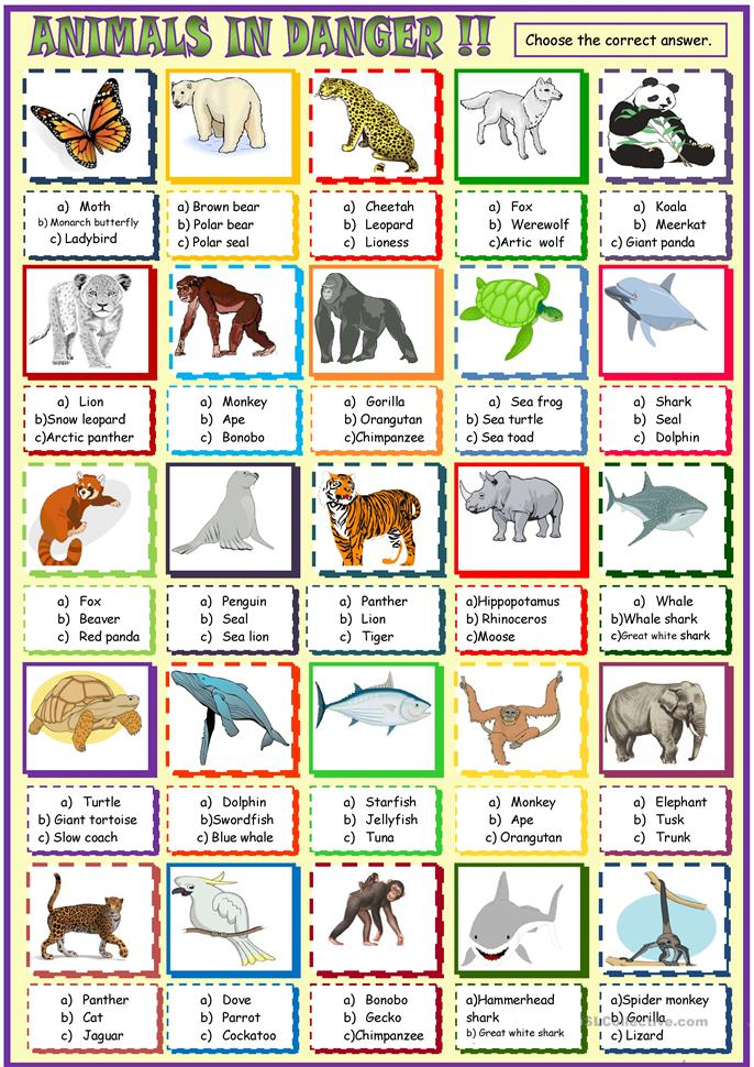 Printables Endangered Species Worksheets 16 free esl endangered animals worksheets multiple choice activity