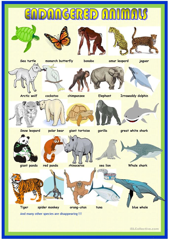 Printables Endangered Species Worksheets 16 free esl endangered animals worksheets pictionary