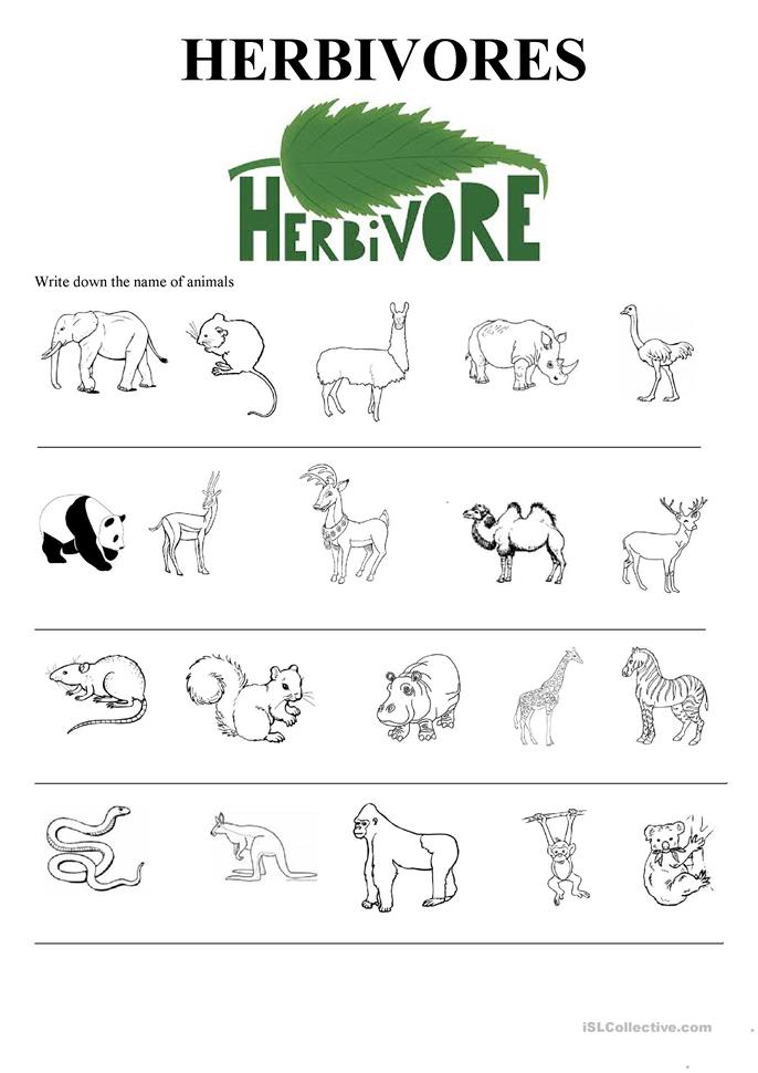 wild animals insects sea animals worksheet free esl printable worksheets made by teachers. Black Bedroom Furniture Sets. Home Design Ideas