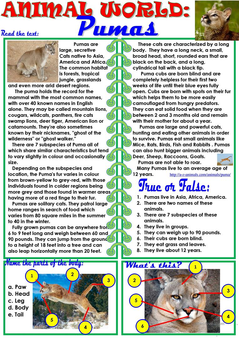 animal world pumas worksheet free esl printable worksheets made by teachers. Black Bedroom Furniture Sets. Home Design Ideas