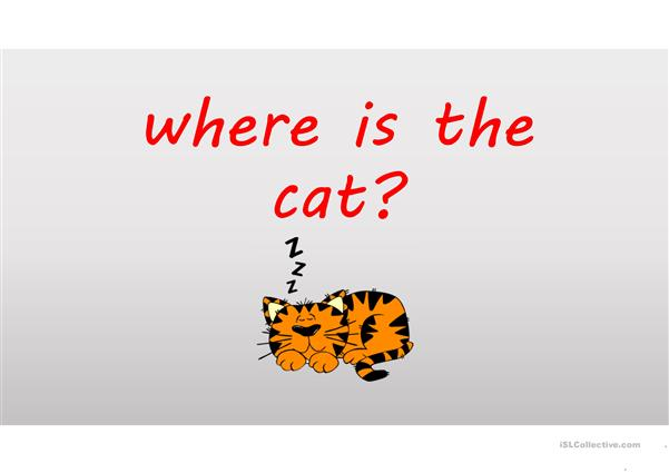 Where is the cat