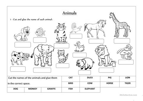English worksheets: ANIMAL - CLASSIFICATION