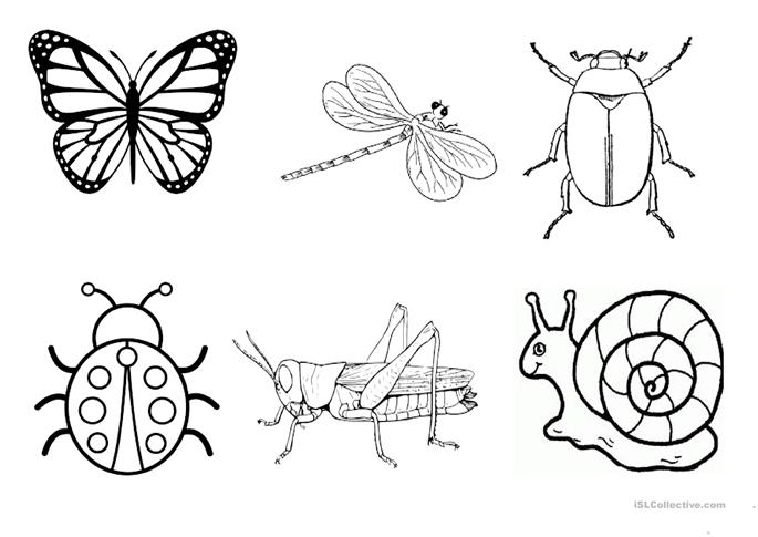 Insect Worksheets | Have Fun Teaching