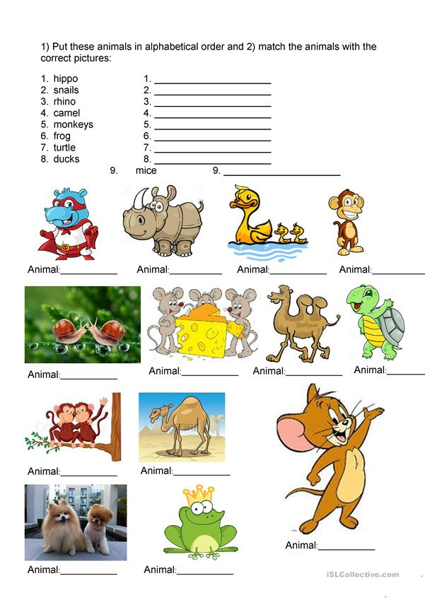 Animals Alphabetical order and Pictures