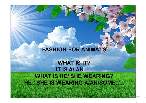 Fashion for domestic animals