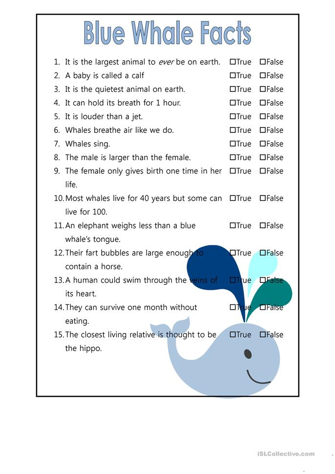 Whale Worksheets - Davezan