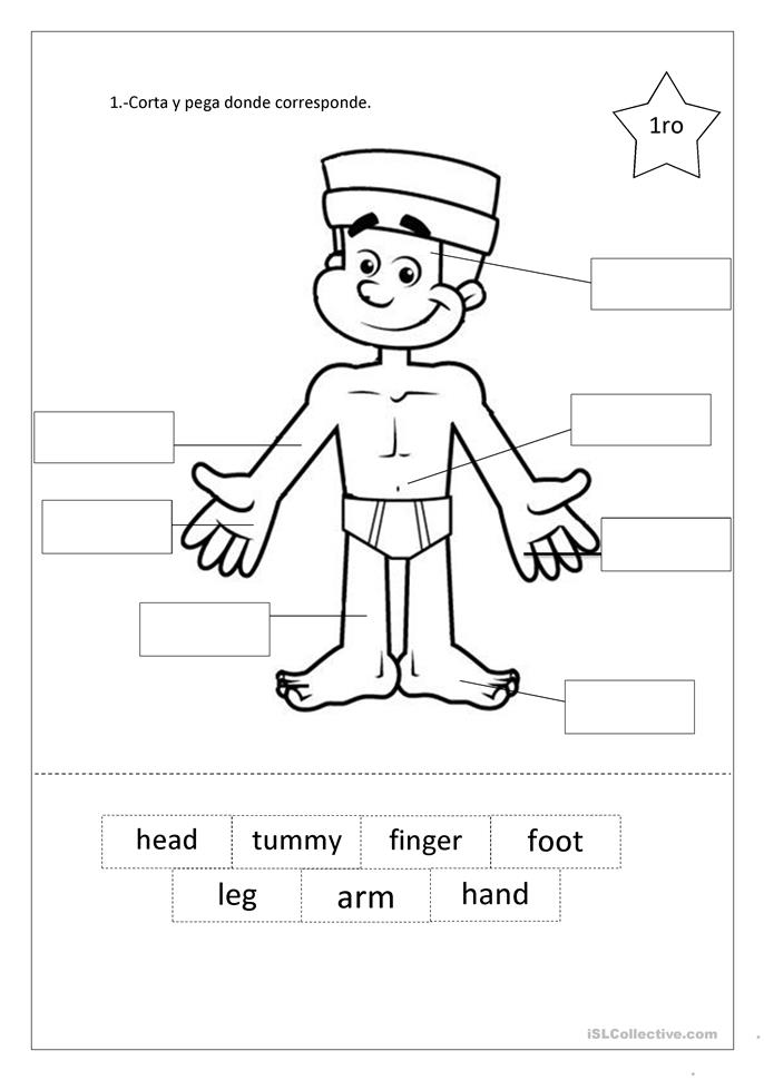 preschool body parts worksheets - The Best and Most Comprehensive ...