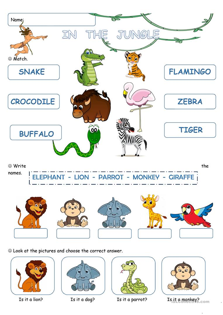 Jungle Animals Worksheet : In the jungle worksheet free esl printable worksheets