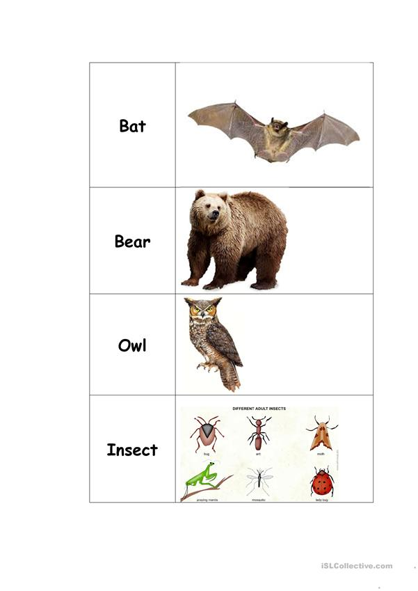 Animal Vocabulary Cards