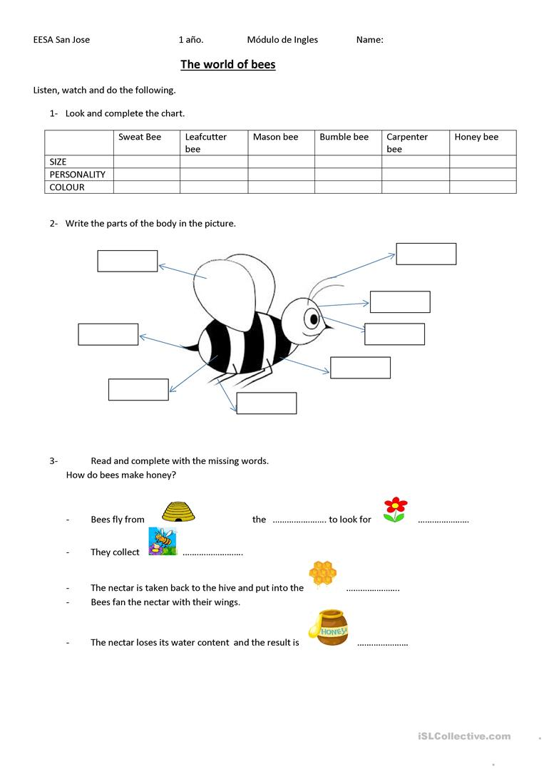 The world of bees - English ESL Worksheets