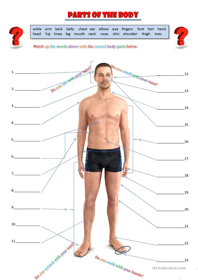 Parts of the body - ESL worksheets