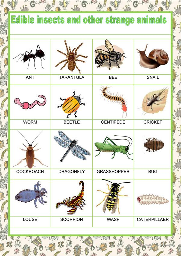 Food - Edible insects
