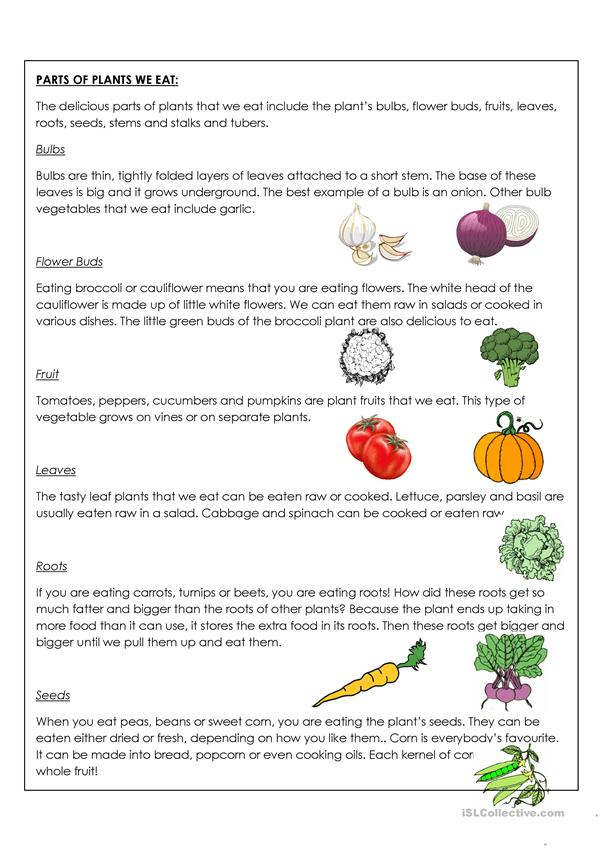 Parts of the plant that we can eat worksheet - Free ESL ...