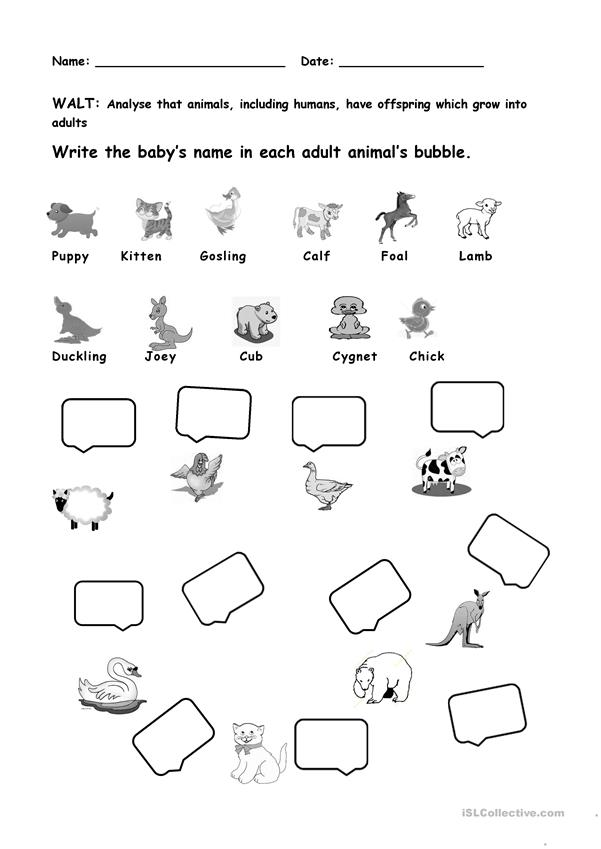 animals and their young ones worksheet free esl printable worksheets made by teachers. Black Bedroom Furniture Sets. Home Design Ideas