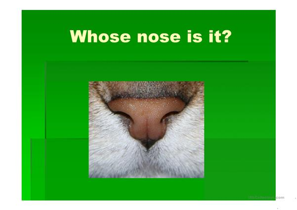 Whose nose is that?(Possessive case)