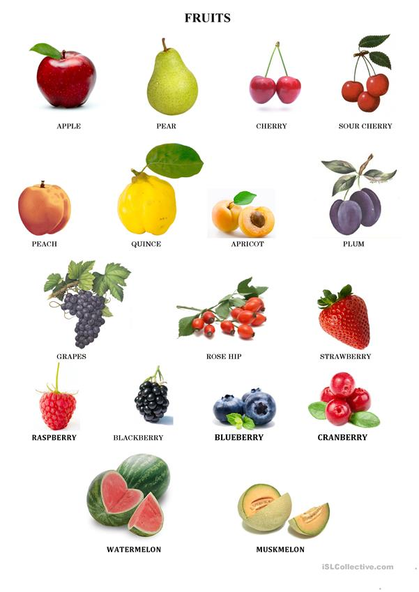Food-FRUITS/VEGETABLES/CITRUS FRUITS/NUTS (5 pages)
